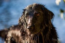 Hunde_13