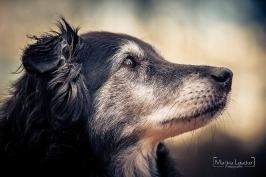 Hunde_15