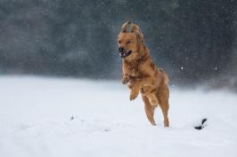 Hunde_16