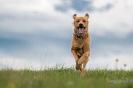 Hunde_9